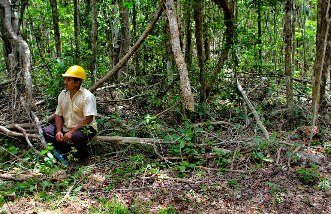 selva maya archivo CCMSS consuelo pagaza