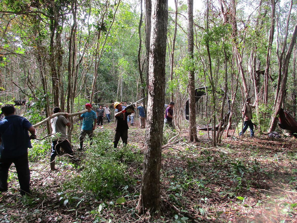 Tag archive for bosque consejo civil mexicano para la for Manejo de viveros forestales