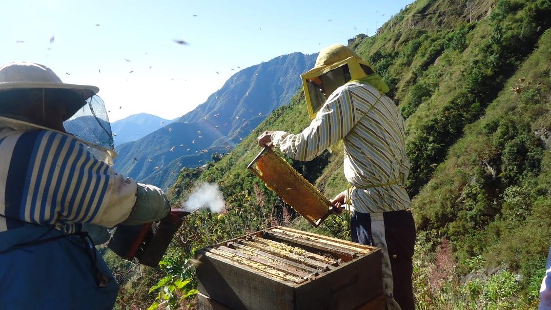 La apicultura es una actividad fundamental para numerosas comunidades de las regiones forestales del país. La crianza de las abejas para la producción de miel y cera es una actividad que genera ingresos e integra a diversos miembros de las familias.