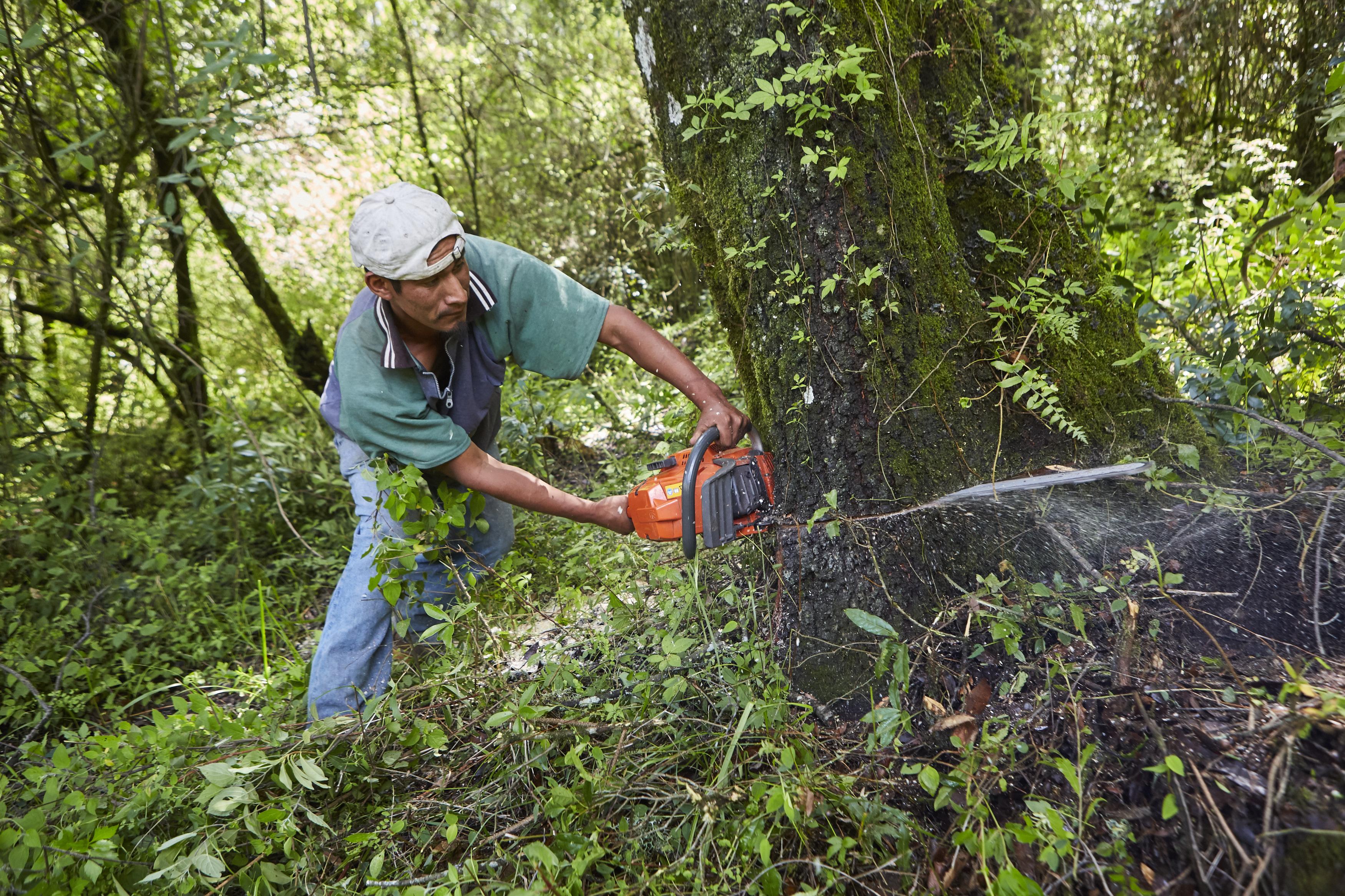 El aprovechamiento forestal maderable es una actividad productiva que permite a las comunidades forestales obtener ingresos para mejorar su bienestar (Amanalco, Estado de México). Foto de: Prometeo Lucero